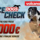 Dogs Race Check Avgust